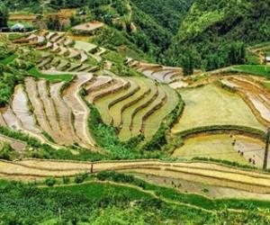 Giang Ta Chai Village Sapa